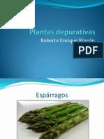 Roberto Enrique Rincón, plantas depurativas.pptx