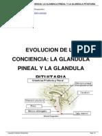 La Glandula Pineal y Pituitaria