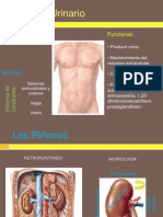 Generalidades de La Histologia Del Sistema Renal