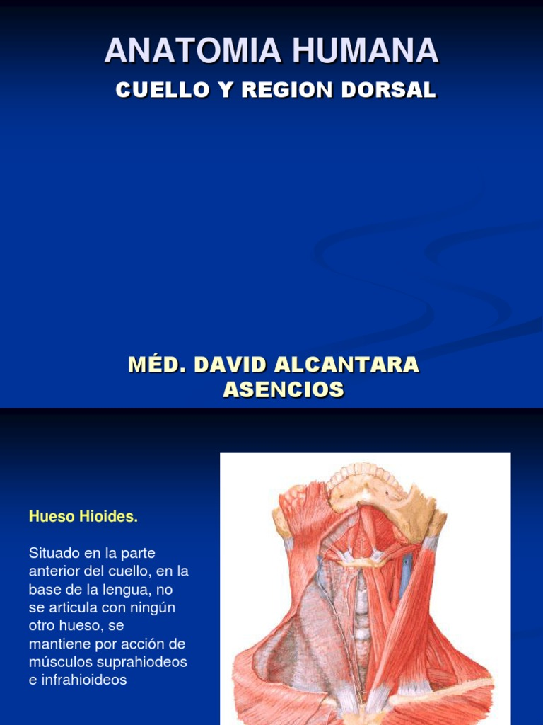 Anatomia Del Cuello Mayo 2014