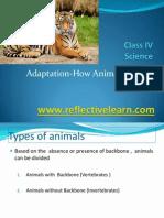 Summary Adaptations How Animals Survive Upload