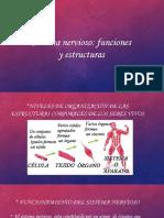 Sistema Nervioso Funciones y Estructuras