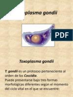 Toxoplasma gondii.pptx