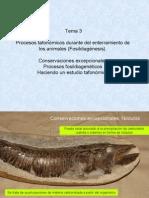 3 PVyHumana-Tafonomia Fosildiagnesis