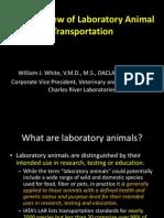 William White Intro to Transportation