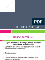 tejidoepitelial13-120801211423-phpapp01