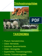 Familia Trichostrongylidae.ppt
