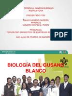 GUSANO BLANCO.ppt