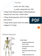 Rangka Manusia.pptx