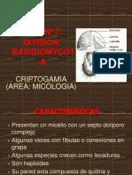 7- Division Basidiomycota