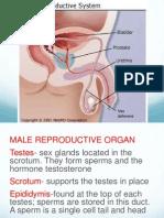 Female Sex Organ LESSON