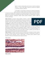 Tejidos epiteliales