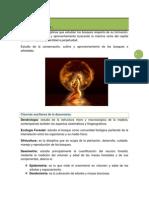 textopararelodasonomia-120925005149-phpapp01