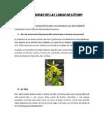Biodiversidad en las Lomas de Lúcumo.docx
