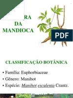 Aula 01 - Botânica e Variedades Da Mandioca
