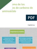 Catabolismo de Los Esqueletos de Carbono de Aminoácido