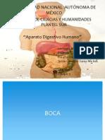 Aparato Digestivo Humano(1)