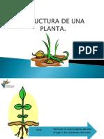 Pt Estructura de Una Planta