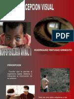 Percepcion Visual 2010