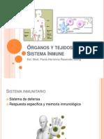 Órganos Tejidos Del Sistema Inmune