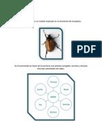Anexos escarabajo.docx