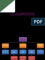 5.- Leucopoyesis