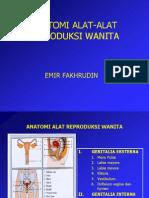 Anatomi Genitalia Eksterna Dan Interna