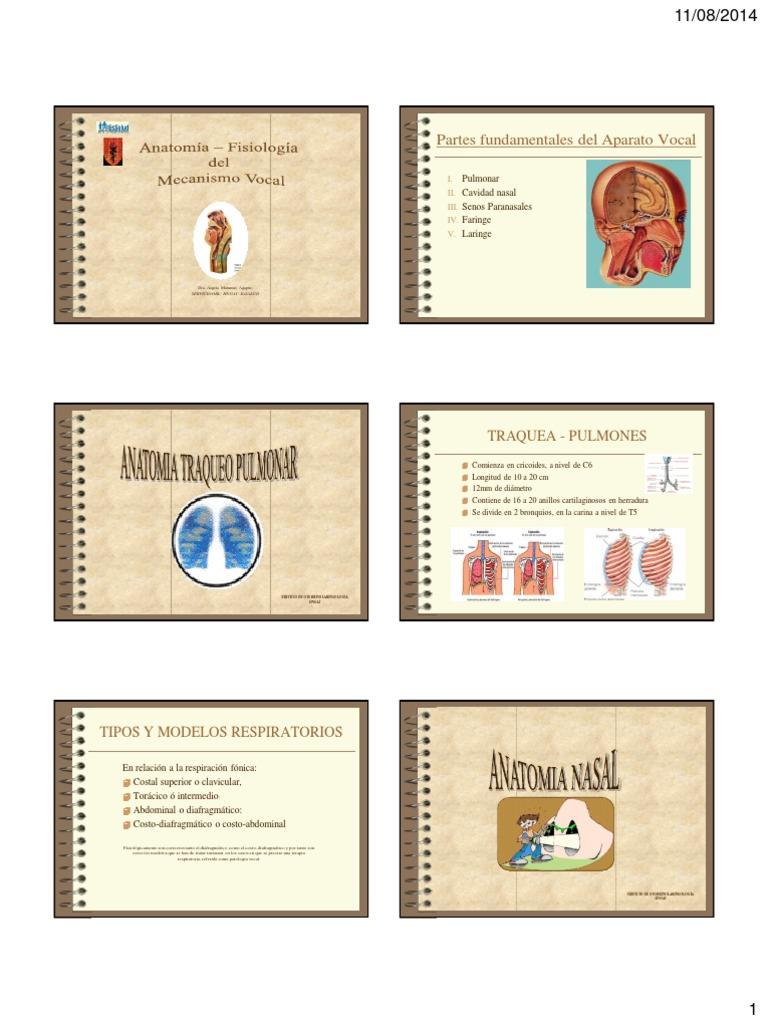 t1- Anatomiafisiologia Del Mecanismo Vocal