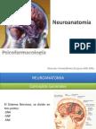 02 Neuroanatomia, Cerebro y Conducta