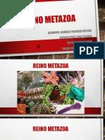 REINO METAZOA Eben Ortega Robles