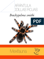 Tarantula BS.pdf
