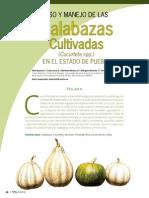 Articulo Red Calabaza