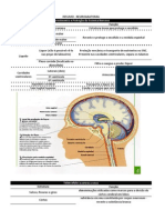 Resumo Neuro