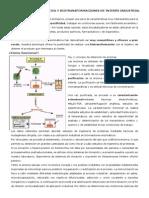 Biotecnología Enzimática y Biotransformaciones de Interés Industrial