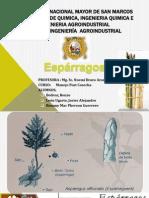 EXPOSICION 1 Esparragos Post Cosecha