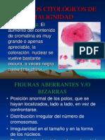Tema 3. Criterios de Malignidad. Evolución. Fenómenos y Mecanismos Celulares. Mitosis y Meiosis. 2014. U.latina.