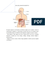 Anatomiía y Fisiologia Del Aparato Digestivo