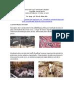 PorcinoculturA en ECUADOR