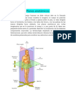 Planos Anatómicos Sandra Maldonado Cozatl.docx25