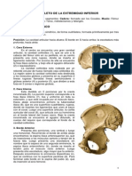 osteologiademiembroinferior-111016202427-phpapp02