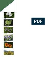 Paleta Vegetal Excel
