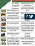 Bovinos Productores de Carne