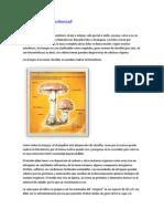 94120911-champinon.pdf