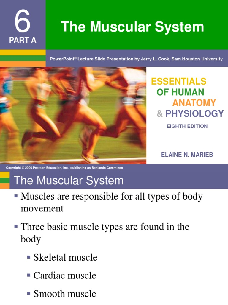 Chapter 6 - Muscular System | Muscle Contraction | Muscle