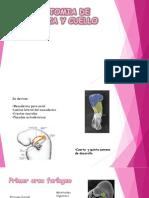 Anestesia - Cabeza y Cuello