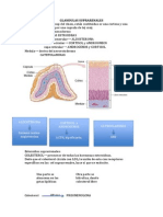 Fisiologia GLANDULAS SUPRARENALES.docx