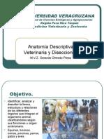 Anatomia Diapositivas