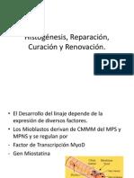 Histogénesis, Reparación, Curación y Renovación
