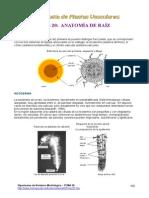 Tema20.Anatomia Raiz