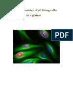 Basic Chemistry of All Living Cells